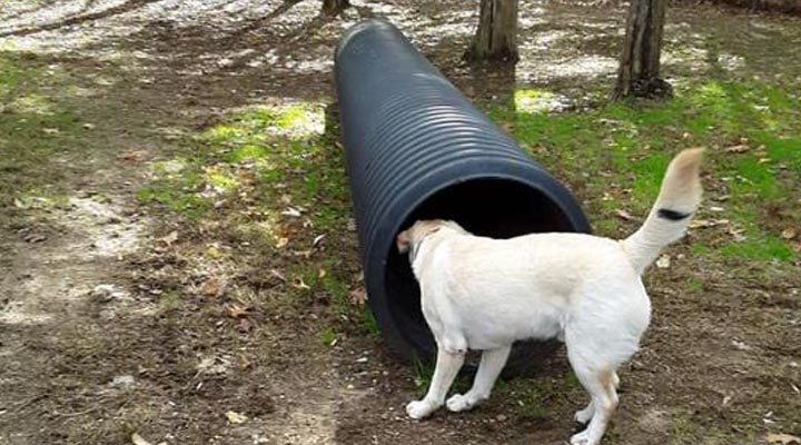 white dog tube